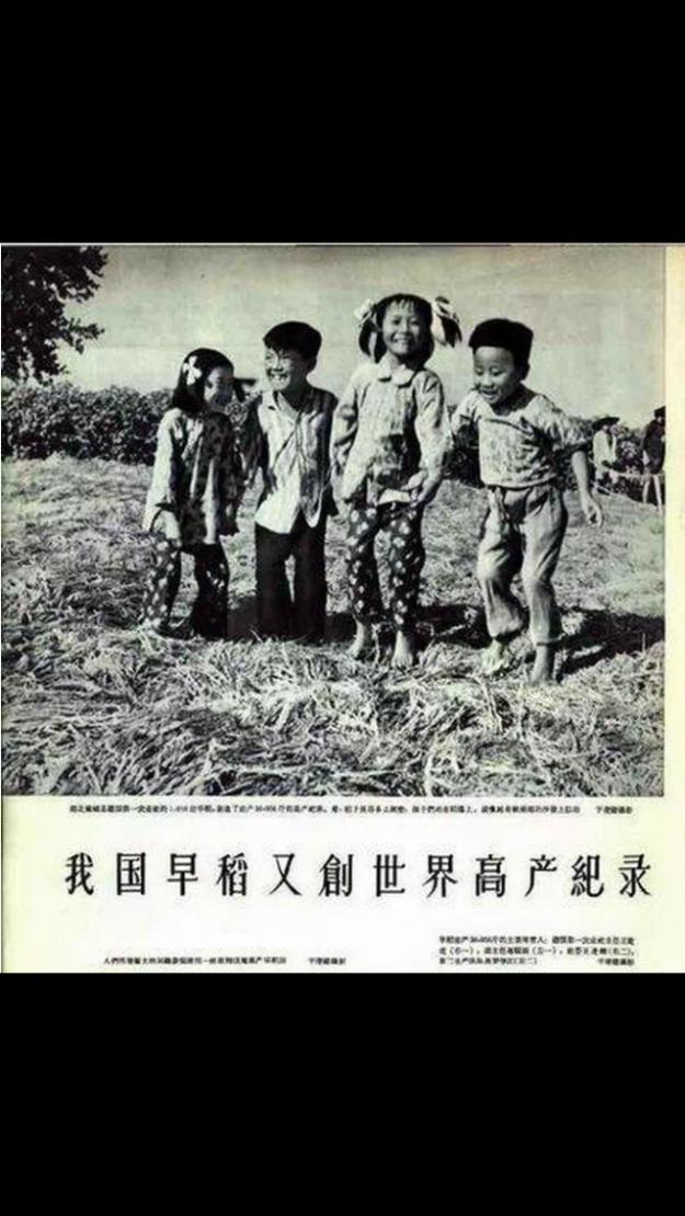四個幼童站在堆得厚厚的稻草上,顯示畝產創世界記錄